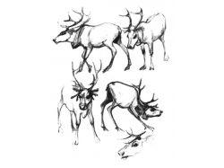 Несложные рисунки карандашом 1