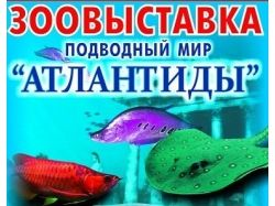 Конкурс подводный мир для детей 3