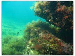 Моря подводный мир 3