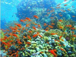Моря подводный мир 4