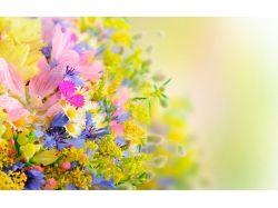 Новые картинки цветы 6