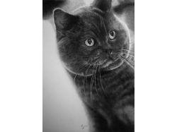 Рисунки котов карандашом 1