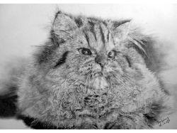 Рисунки котов карандашом 2