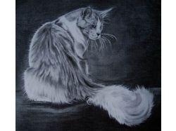 Рисунки котов карандашом 3