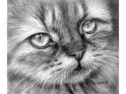 Рисунки котов карандашом 4