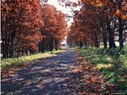 Картинки рисунки осень 5