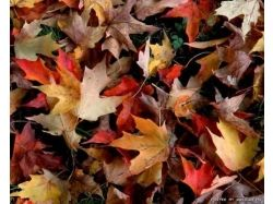 Картинки рисунки осень 6