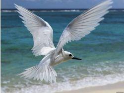 Картинки чайка 2