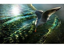 Картинки чайка 3