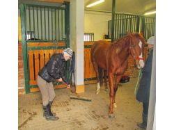 Конный спорт фото красивых лошадей 2