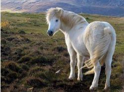 Конный спорт фото красивых лошадей 4