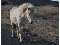 Конный спорт фото красивых лошадей 5