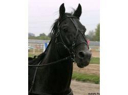 Конный спорт фото красивых лошадей 6