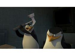 Картинки пингвины 1