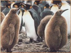 Картинки пингвины 3