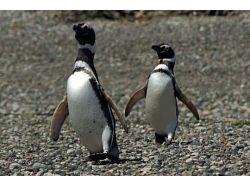 Картинки пингвины 4