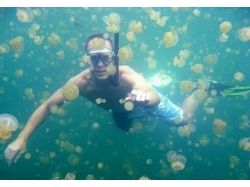 Картинки медуз 4