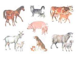 Картинки животные домашние и дикие 2