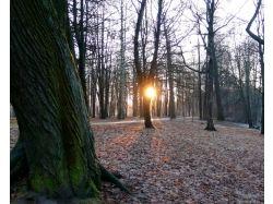 Картинки начало зимы 5