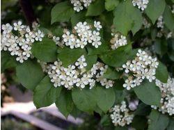 Фото цветы красиво цветущие 6