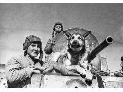 Великая отечественная война оружие картинки 6