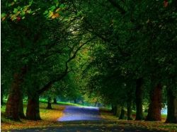 Картинки осень в парке 5
