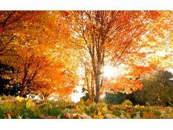 Картинки осень в парке 6