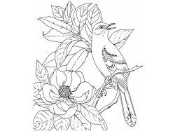 Картинка соловей 1