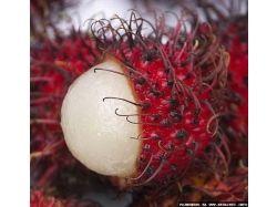 Экзотические фрукты фото индии 4