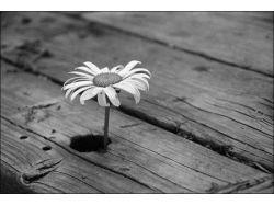 Картинки любовь черно белые 6