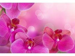 Картинки цветы скачать фотошоп 3