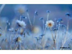 Красивые яркие картинки 4