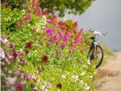 Фото цветы дорога 2