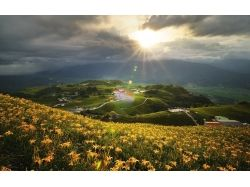 Фото цветы дорога 4