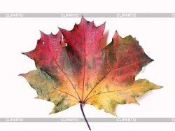 Осенний кленовый лист фото 2