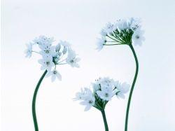 Красивые цветочки картинки 3