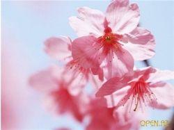 Красивые цветочки картинки 4