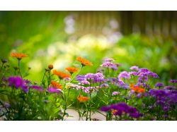 Лето картинки цветы 1
