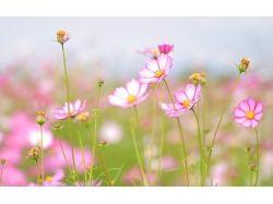 Лето картинки цветы 3