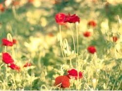 Лето картинки цветы 6