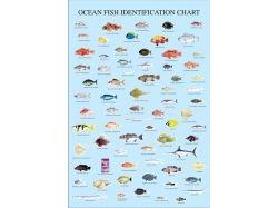 Природа картинки рыбы 1