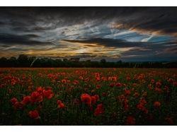 Скачать бесплатно картинки цветы красивые 2