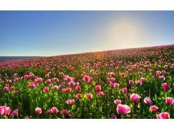 Скачать бесплатно картинки цветы красивые 6