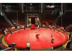 Картинки цирка 3