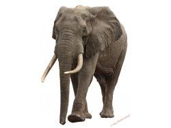 Картинки слон для детей 6