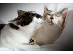 Картинки животные в паре 1