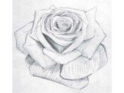 Рисунок карандашом цветы 3
