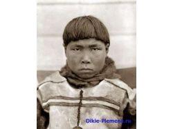 Фото эскимосы 2