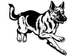 Картинки волков красивые 5