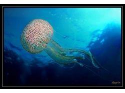 Подводный мир бразилии 6